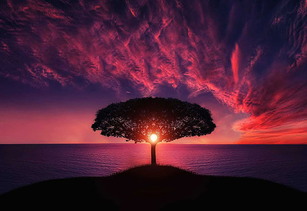 photo of tree at sunset near ocean